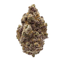 Purple Champagne